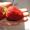 Саженцы садовой крупноплодной земляники #866403