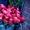 Голландские розы в Караганде с доставкой за 60 минут #1213068