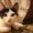 Ищем дом для маленьких озорных котят  #1445485