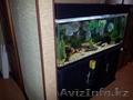 Продам аквариум 450лит. + тумба
