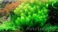 Аквариумные растения в большом ассортименте: