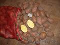 Доставка картофеля