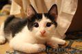 Ищем дом для маленьких озорных котят